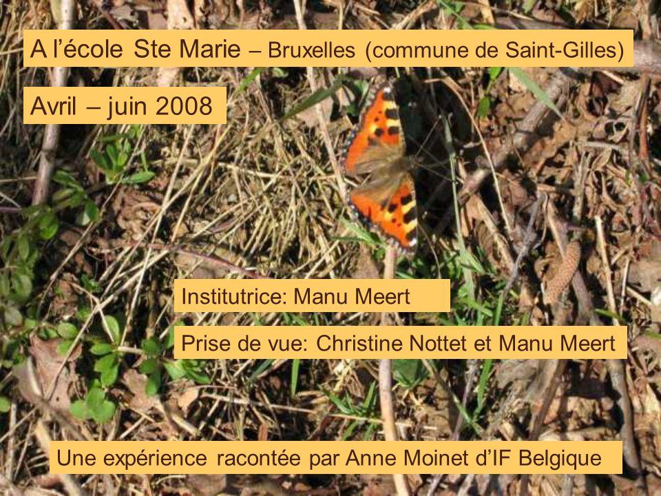 A lécole Ste Marie – Bruxelles (commune de Saint-Gilles) Institutrice: Manu Meert Avril – juin 2008 Une expérience racontée par Anne Moinet dIF Belgiq