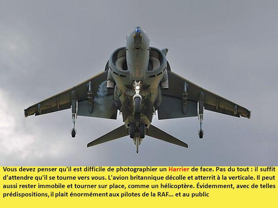 Vous devez penser qu'il est difficile de photographier un Harrier de face. Pas du tout : il suffit d'attendre qu'il se tourne vers vous. L'avion brita