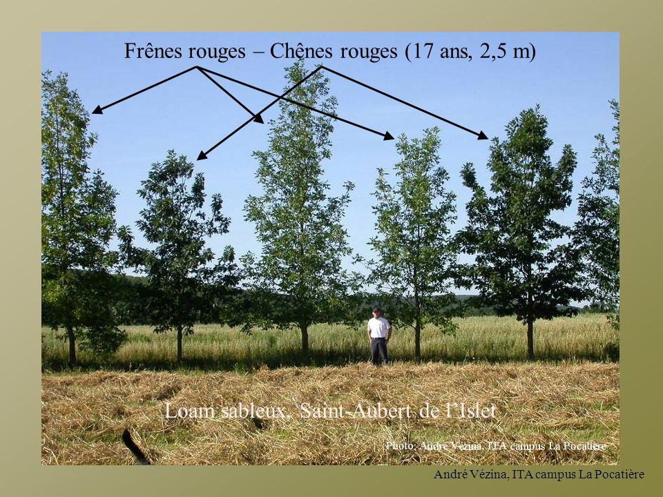 Frênes rouges – Chênes rouges (17 ans, 2,5 m) Loam sableux, Saint-Aubert de lIslet
