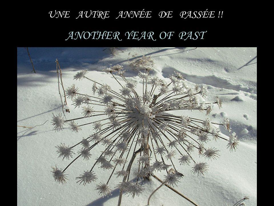 UNE AUTRE ANNÉE DE PASSÉE !! ANOTHER YEAR OF PAST