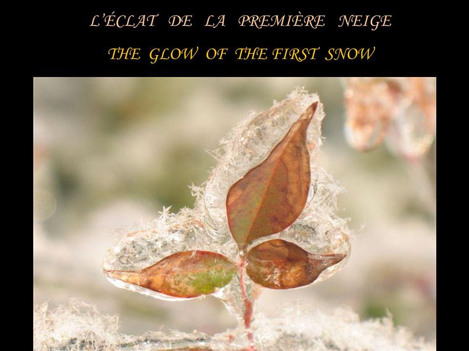 LÉCLAT DE LA PREMIÈRE NEIGE THE GLOW OF THE FIRST SNOW