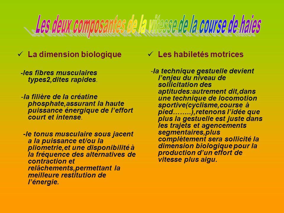 La dimension biologique - les fibres musculaires types2,dites rapides.
