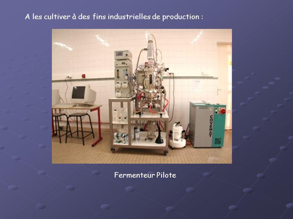 A les cultiver à des fins industrielles de production : Fermenteur Pilote
