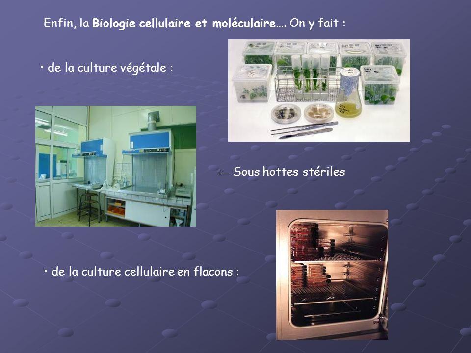 Enfin, la Biologie cellulaire et moléculaire…. On y fait : de la culture végétale : de la culture cellulaire en flacons : Sous hottes stériles
