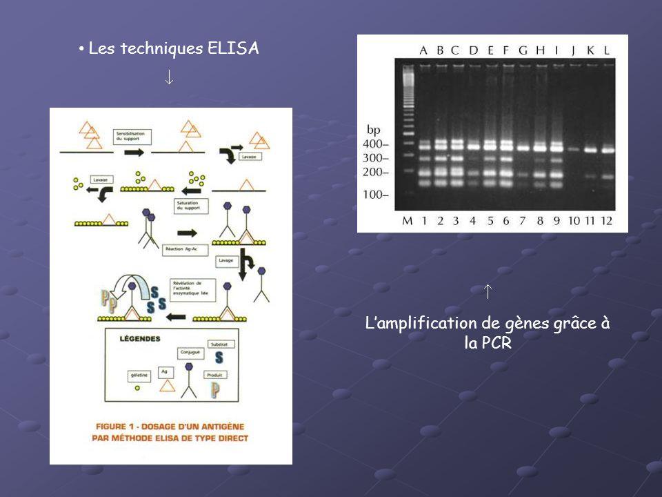 Les techniques ELISA Lamplification de gènes grâce à la PCR