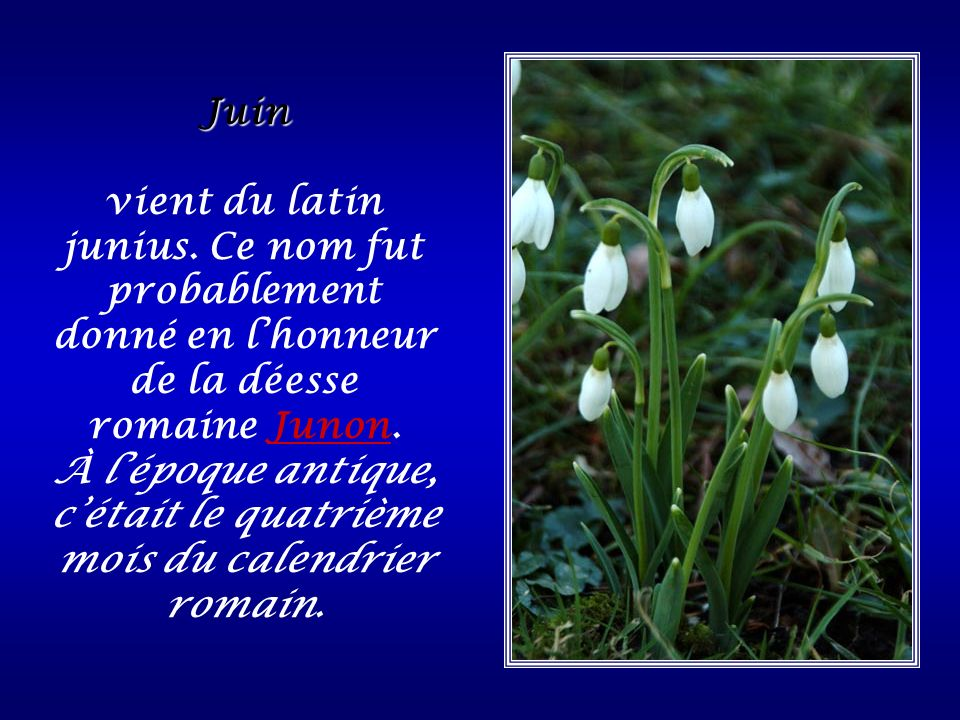 Mai du latin Maius (mensis) « le mois de mai », provient de la déesse Maïa, divinité romaine, fille de Faunus et femme de Vulcain.