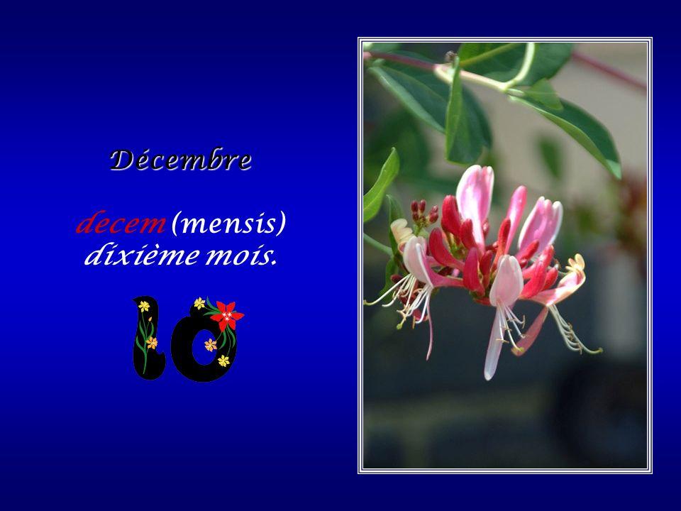 Novembre novem (mensis) : neuvième mois.