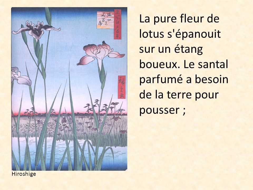 La pure fleur de lotus s'épanouit sur un étang boueux. Le santal parfumé a besoin de la terre pour pousser ; Hiroshige