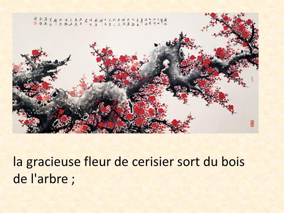 la gracieuse fleur de cerisier sort du bois de l'arbre ;