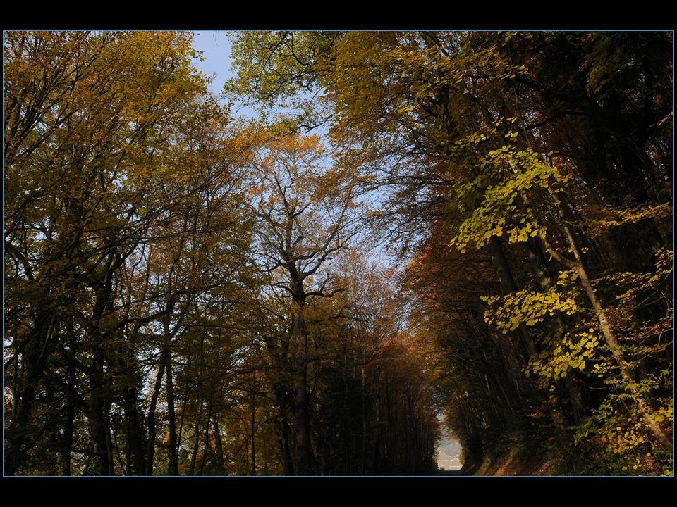 le 18 novembre automne à Antagnes