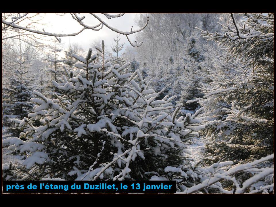 près de létang du Duzillet, le 13 janvier