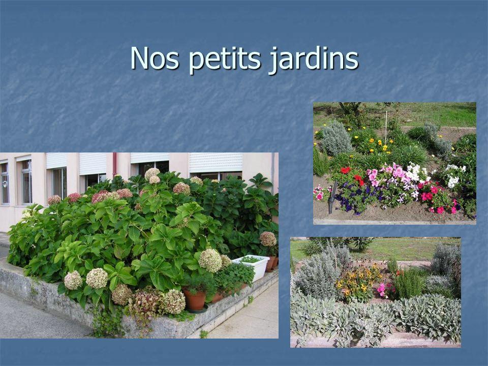 Nos petits jardins
