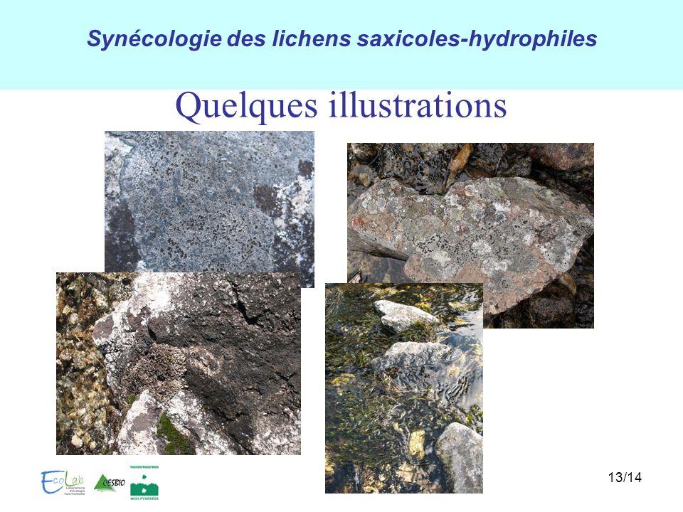 Synécologie des lichens saxicoles-hydrophiles Quelques illustrations 13/14