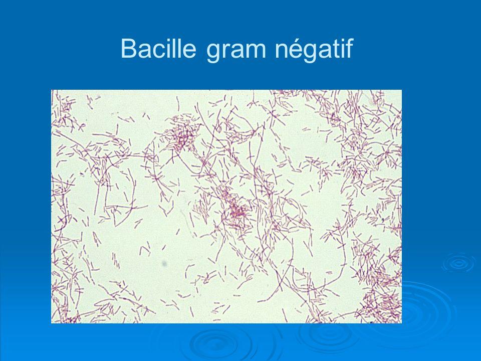 Bacille gram négatif