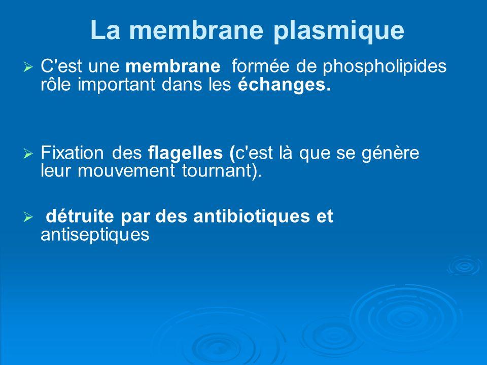 La membrane plasmique C'est une membrane formée de phospholipides rôle important dans les échanges. Fixation des flagelles (c'est là que se génère leu