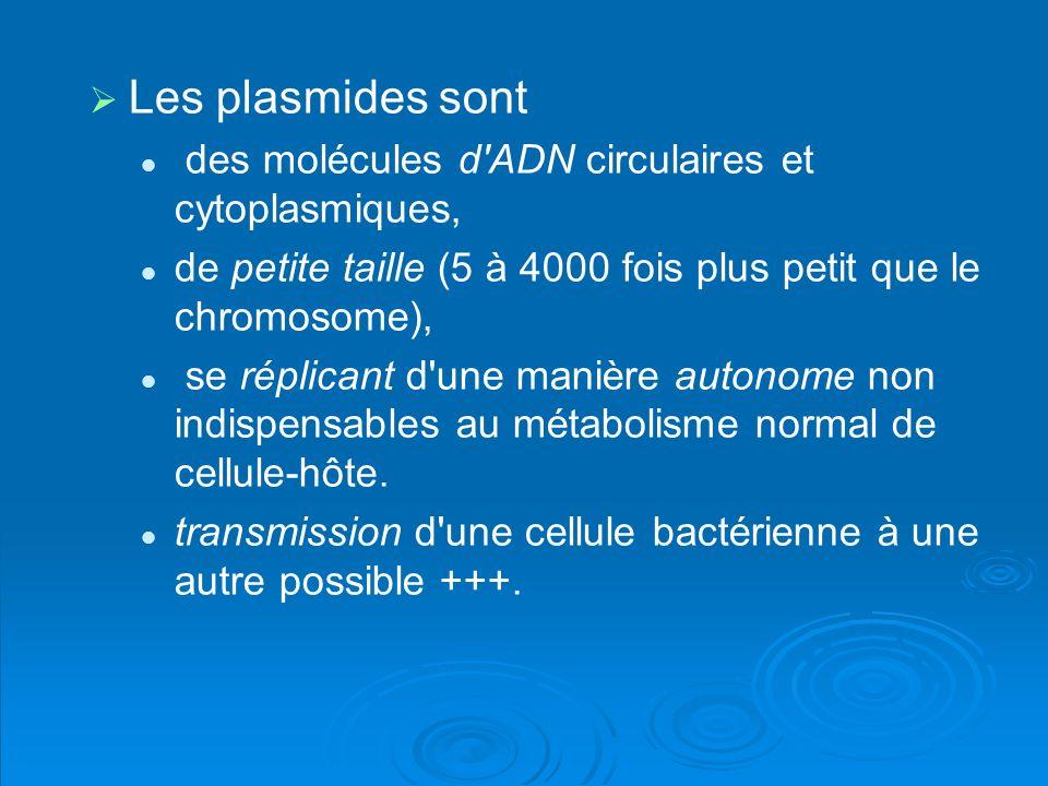 Les plasmides sont des molécules d'ADN circulaires et cytoplasmiques, de petite taille (5 à 4000 fois plus petit que le chromosome), se réplicant d'un