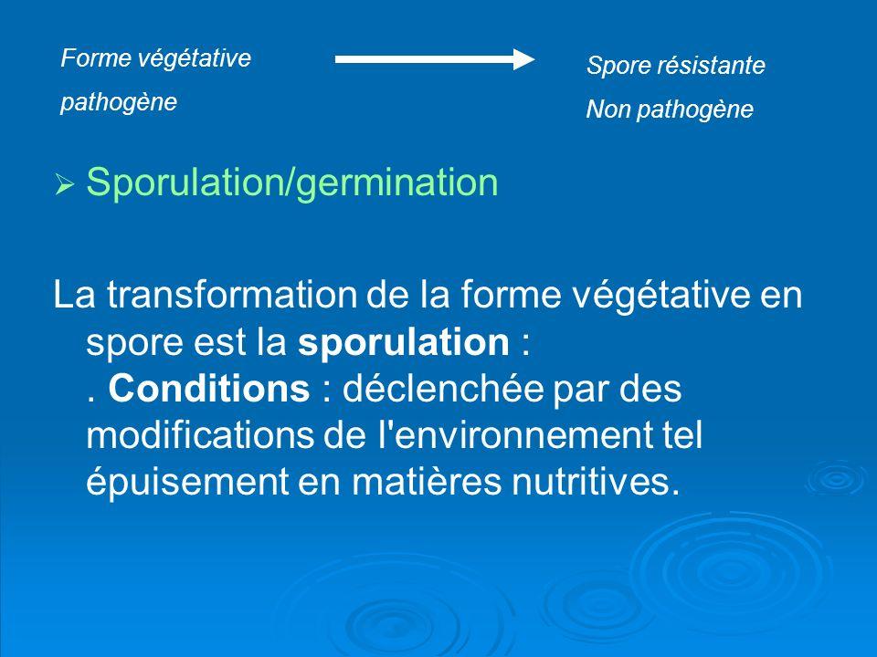 Sporulation/germination La transformation de la forme végétative en spore est la sporulation :. Conditions : déclenchée par des modifications de l'env