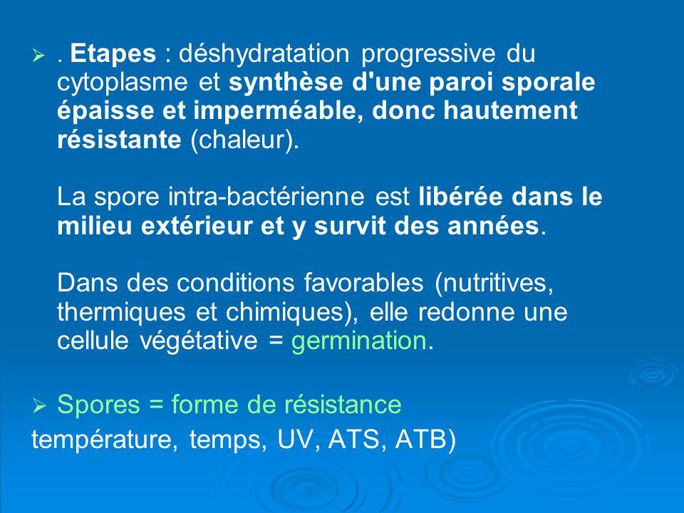 . Etapes : déshydratation progressive du cytoplasme et synthèse d'une paroi sporale épaisse et imperméable, donc hautement résistante (chaleur). La sp