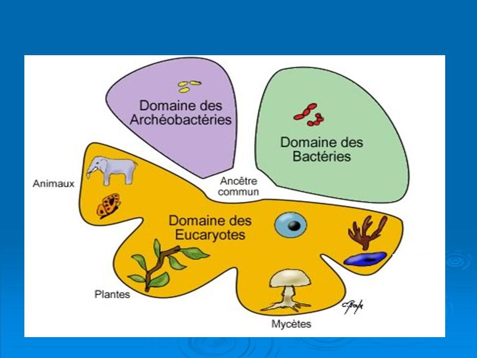 EUCARYOTES Algues Protozoaires Champignons PROCARYOTESbactéries algues bleues VIRUS (acellulaire, structure particulaire) PRIONS II.