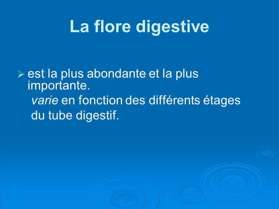 La flore digestive est la plus abondante et la plus importante. varie en fonction des différents étages du tube digestif.