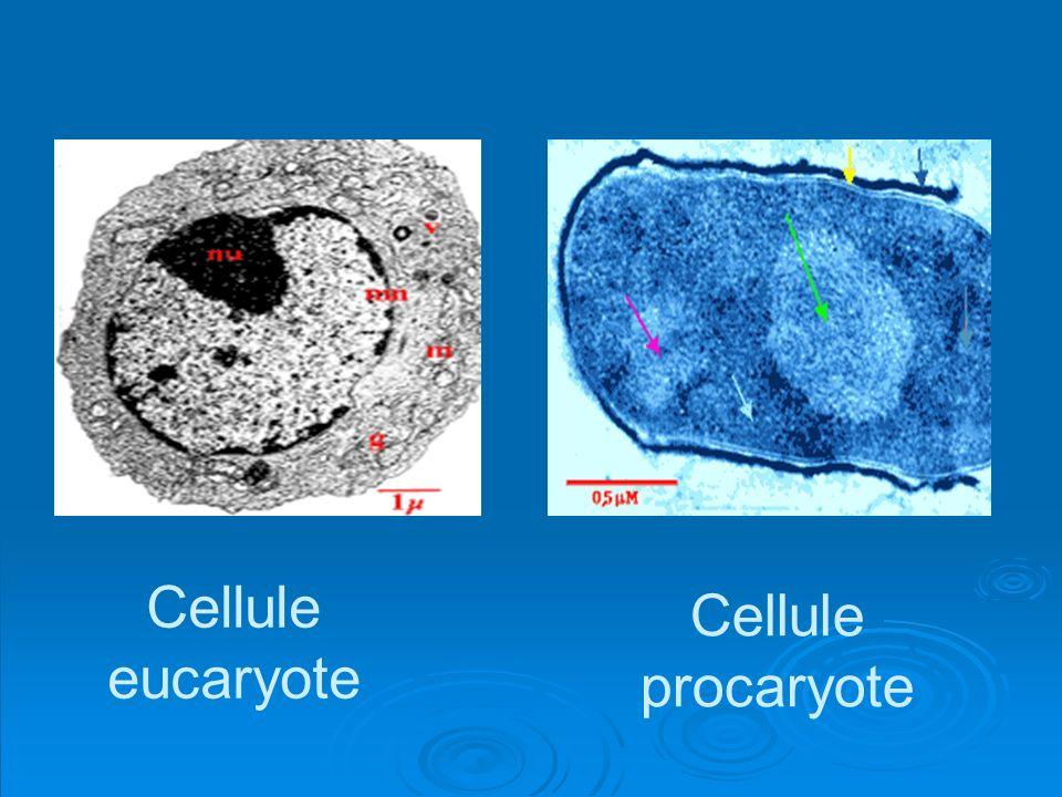 Caractères distinctifs procaryotes et eucaryotes caractéristiquesProcaryoteEucaryote Taille en µmètre0.3 – 2.52 – 20 Chromosome1 seul et unique Plusieurs Membrane nucléaireAbsencePrésence Organites RE, app.Golgi, mitochondries AbsencePrésence Divisionscissiparitémitose
