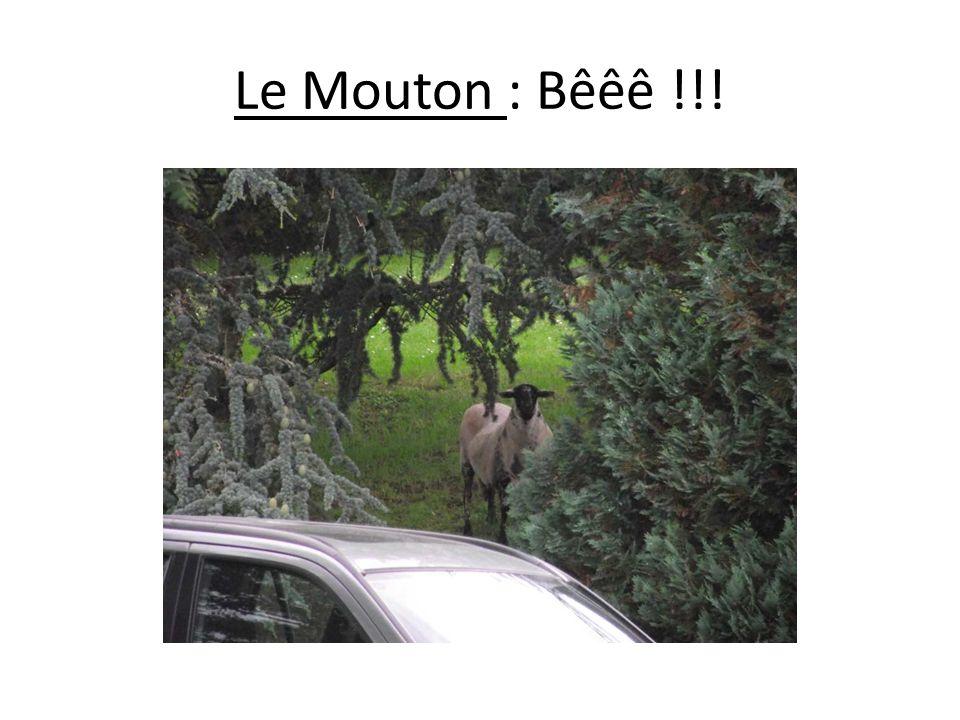 Le Mouton : Bêêê !!!