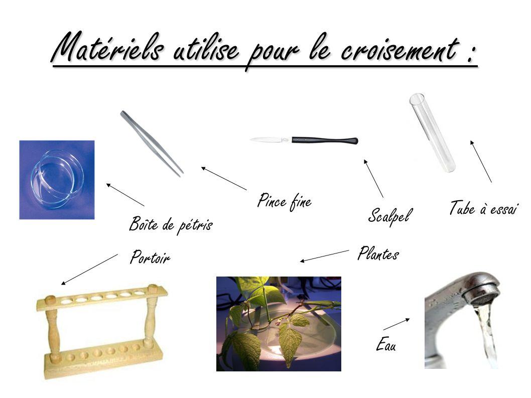 Matériels utilise pour le croisement : Boîte de pétris Pince fine Scalpel Tube à essai Portoir Plantes Eau