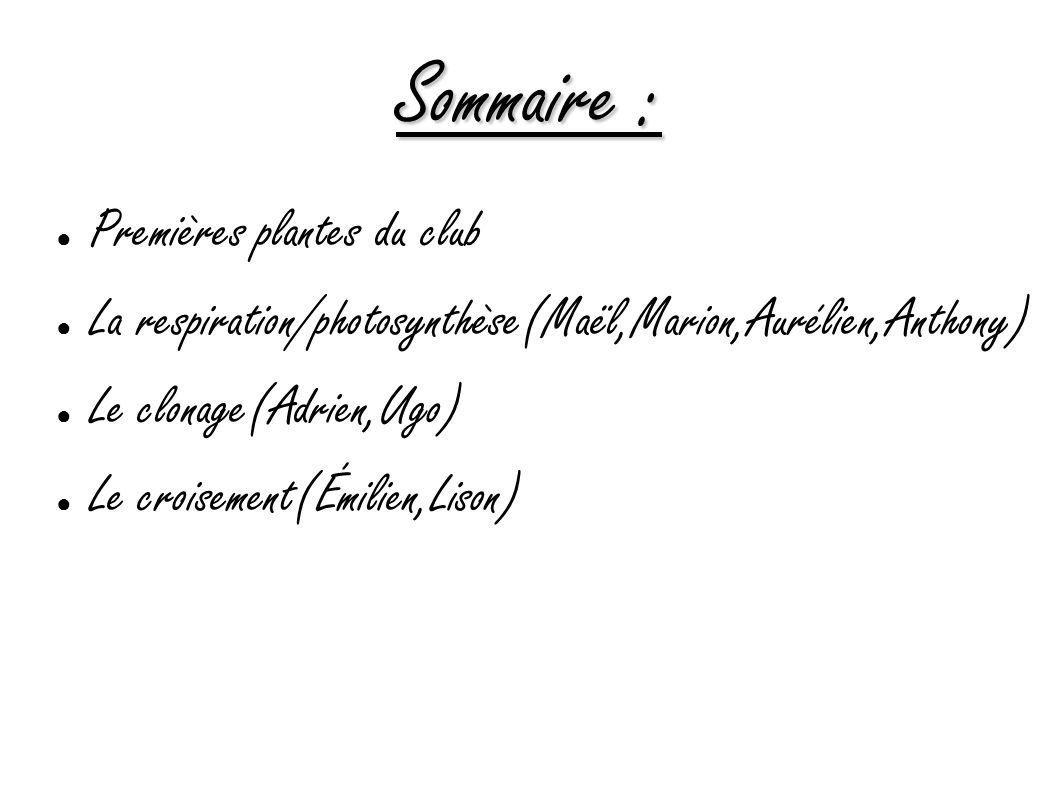 Sommaire : Premières plantes du club La respiration/photosynthèse(Maël,Marion,Aurélien,Anthony) Le clonage(Adrien,Ugo) Le croisement(Émilien,Lison)
