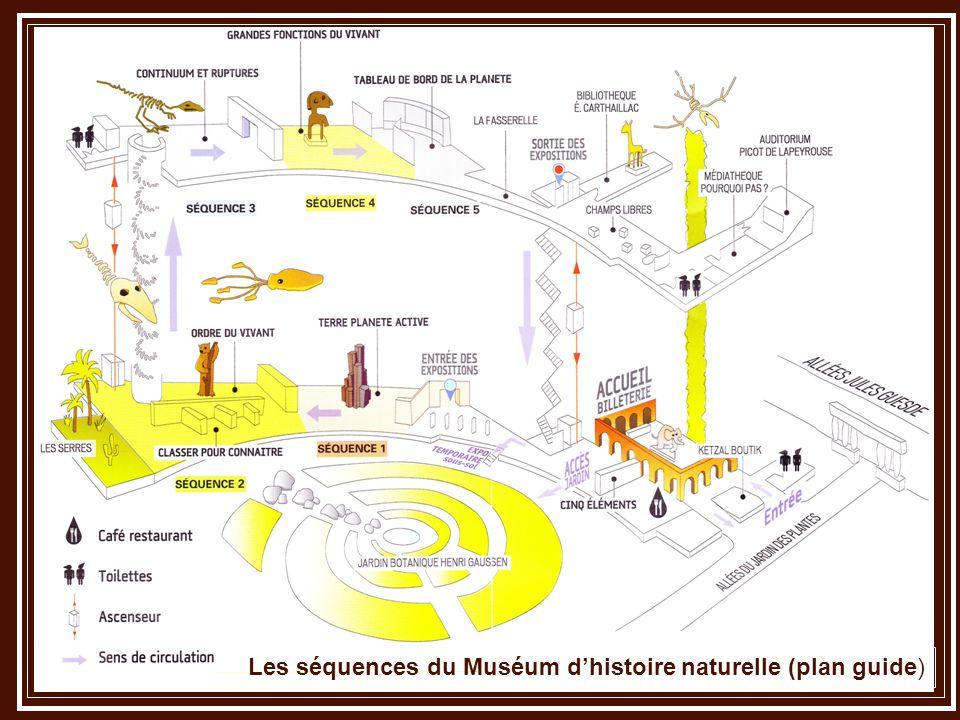 Les séquences du Muséum dhistoire naturelle (plan guide)