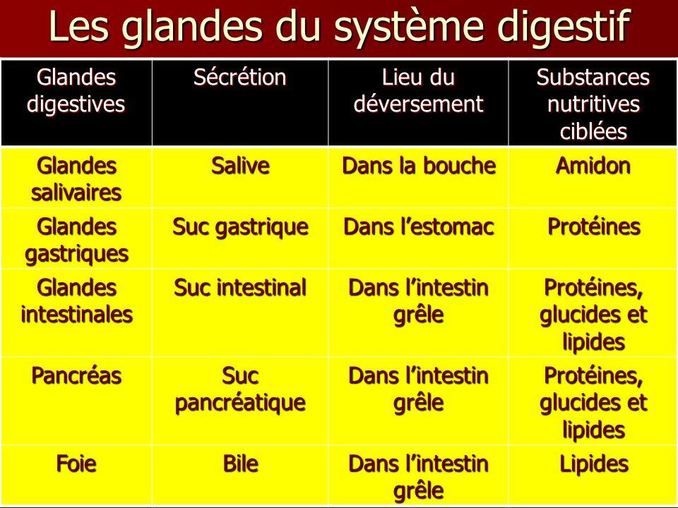 Glandes digestives Sécrétion Lieu du déversement Substances nutritives ciblées Glandes salivaires Salive Dans la bouche Amidon Glandes gastriques Suc