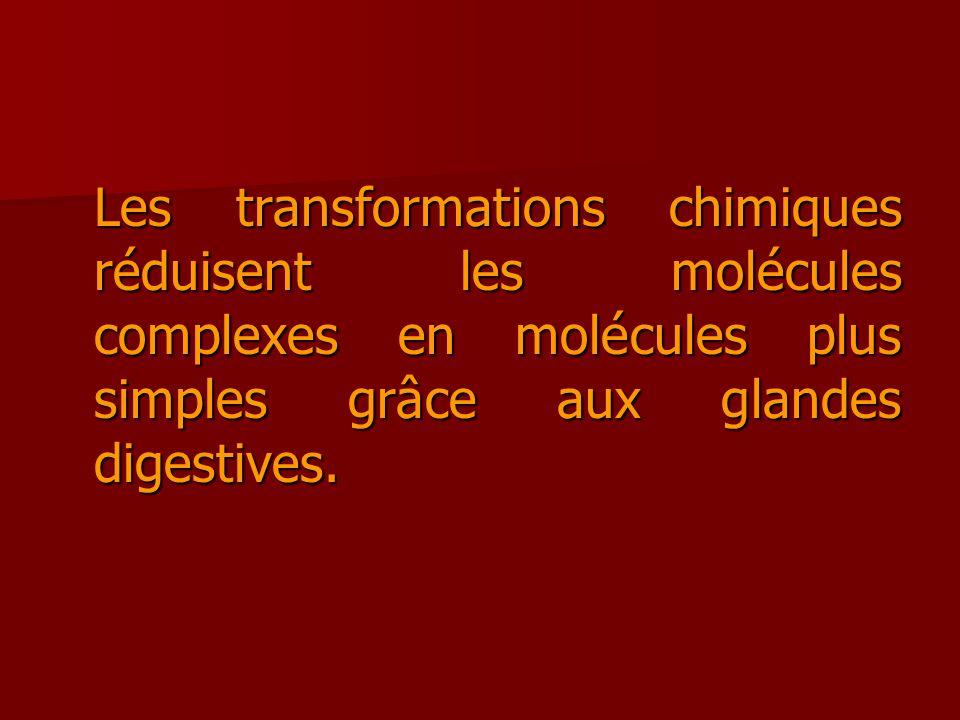 Les transformations chimiques réduisent les molécules complexes en molécules plus simples grâce aux glandes digestives.