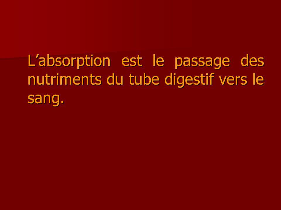 Labsorption est le passage des nutriments du tube digestif vers le sang.