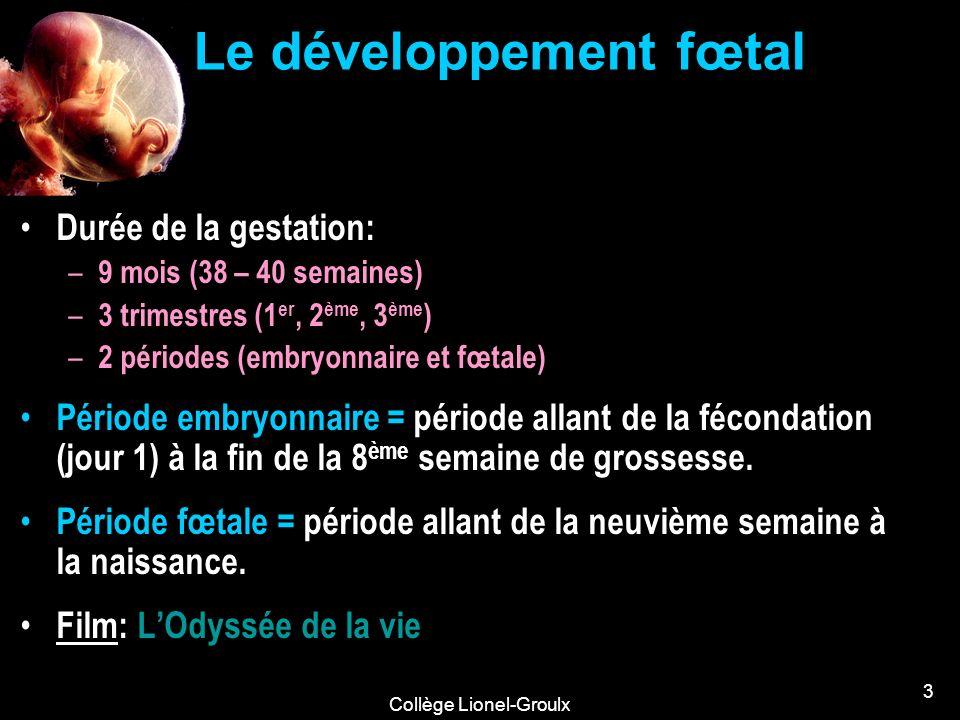 Collège Lionel-Groulx 3 Le développement fœtal Durée de la gestation: – 9 mois (38 – 40 semaines) – 3 trimestres (1 er, 2 ème, 3 ème ) – 2 périodes (e