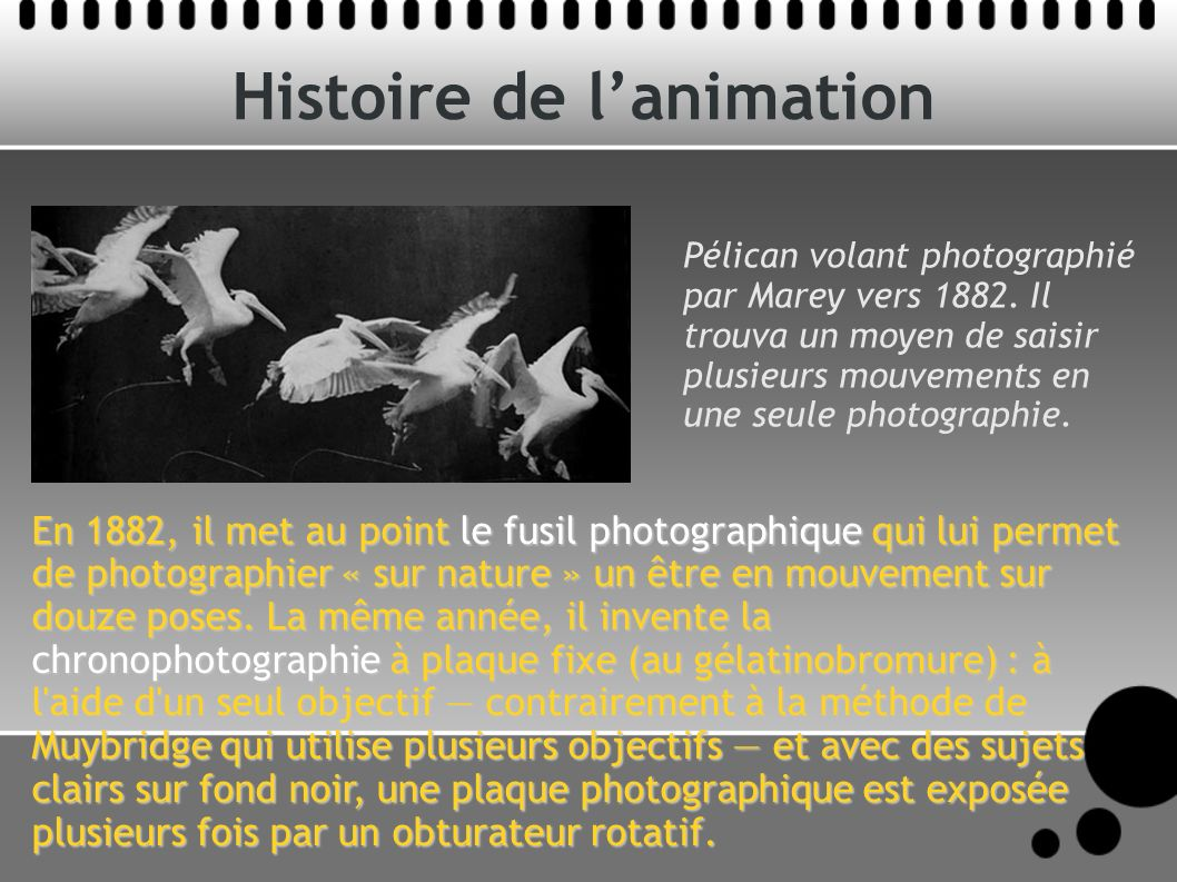 Histoire de lanimation Pélican volant photographié par Marey vers 1882. Il trouva un moyen de saisir plusieurs mouvements en une seule photographie. E