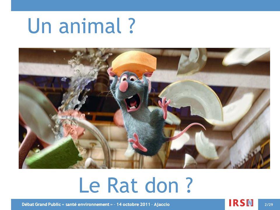 Débat Grand Public « santé environnement » – 14 octobre 2011 – Ajaccio 2/29 Un animal ? Le Rat don ?
