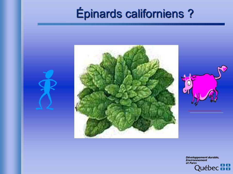 Épinards californiens ?