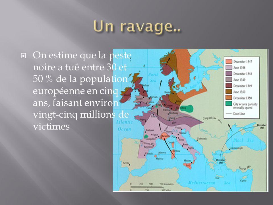 On estime que la peste noire a tué entre 30 et 50 % de la population européenne en cinq ans, faisant environ vingt-cinq millions de victimes