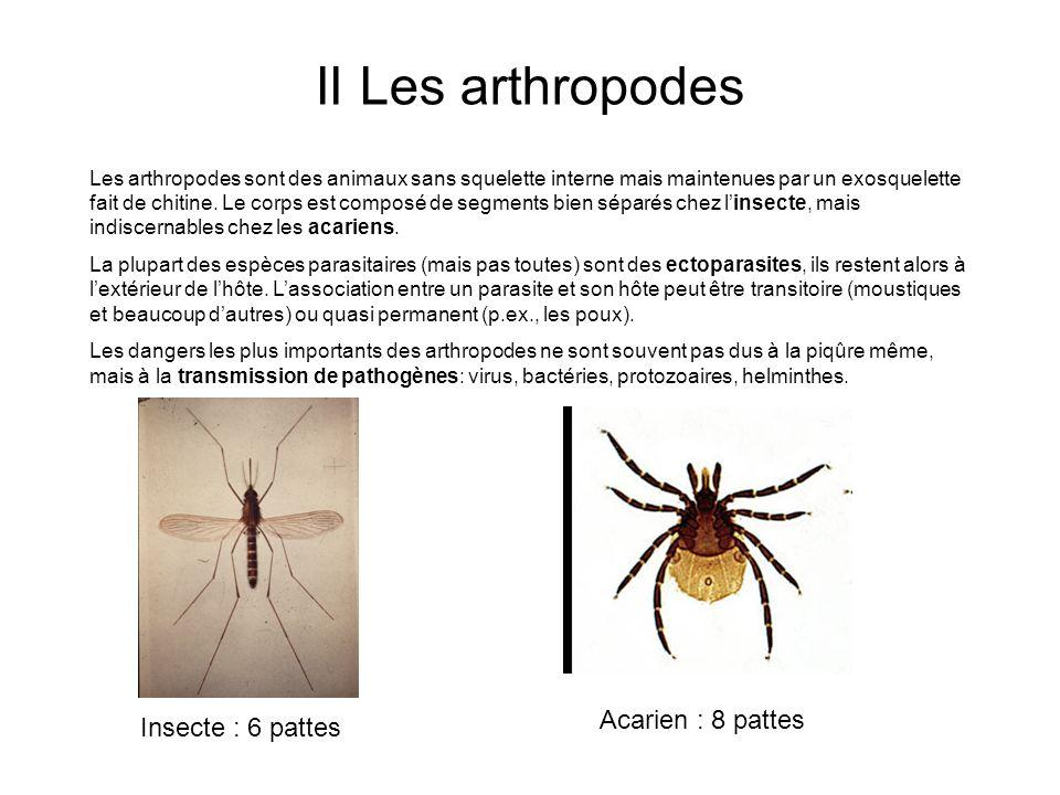 II Les arthropodes Les arthropodes sont des animaux sans squelette interne mais maintenues par un exosquelette fait de chitine.
