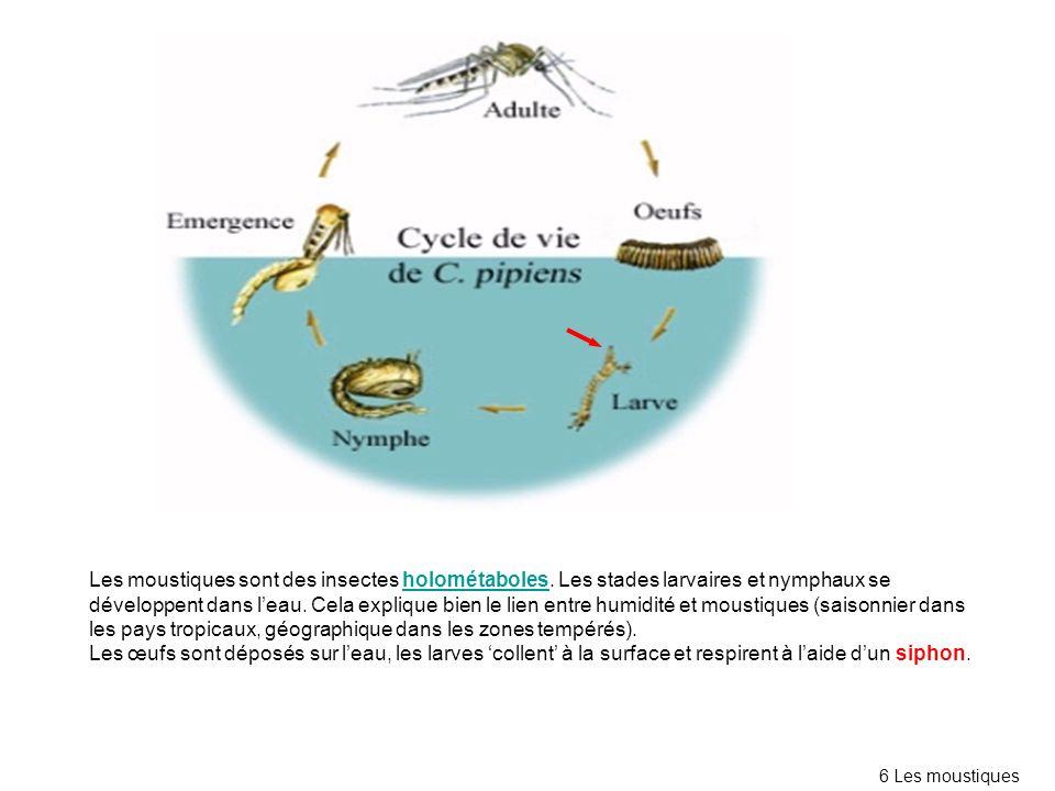 Les moustiques sont des insectes holométaboles. Les stades larvaires et nymphaux se développent dans leau. Cela explique bien le lien entre humidité e
