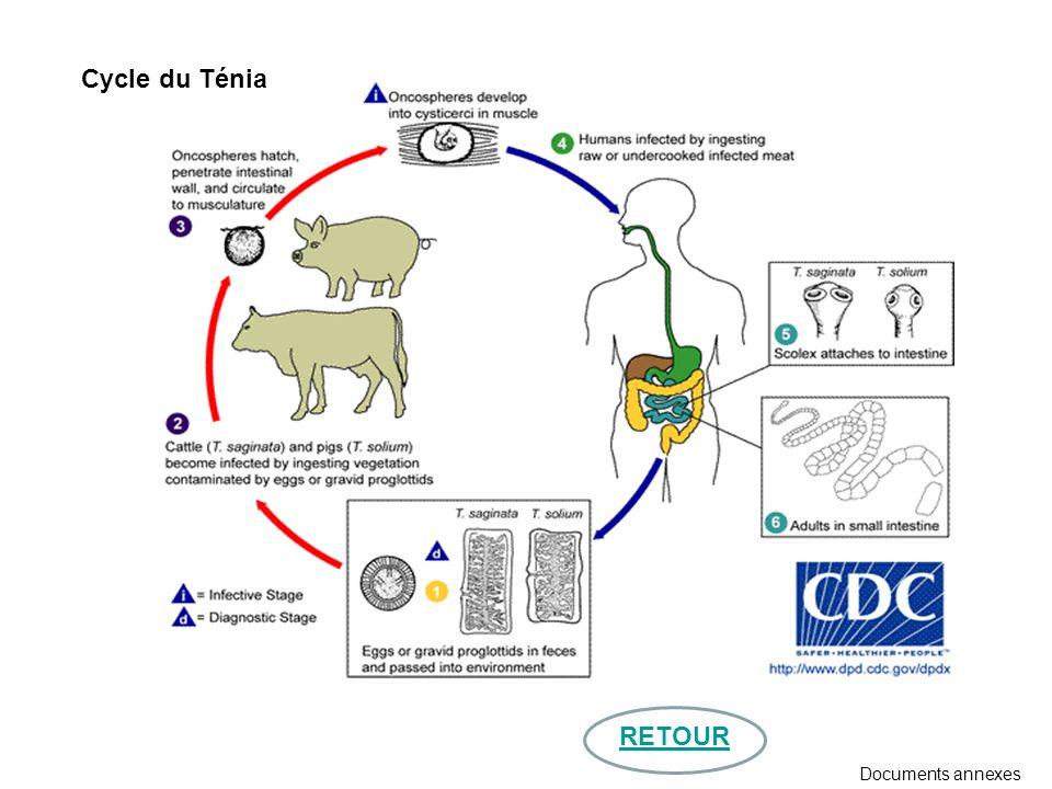 RETOUR Cycle du Ténia