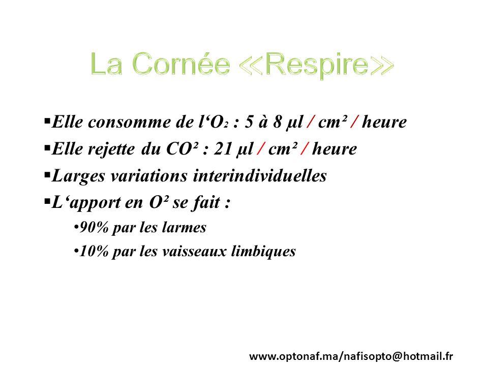Elle consomme de lO 2 : 5 à 8 µl / cm² / heure Elle rejette du CO² : 21 µl / cm² / heure Larges variations interindividuelles Lapport en O² se fait :