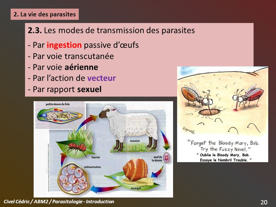 Civel Cédric / ABM2 / Parasitologie - Introduction 20 2.