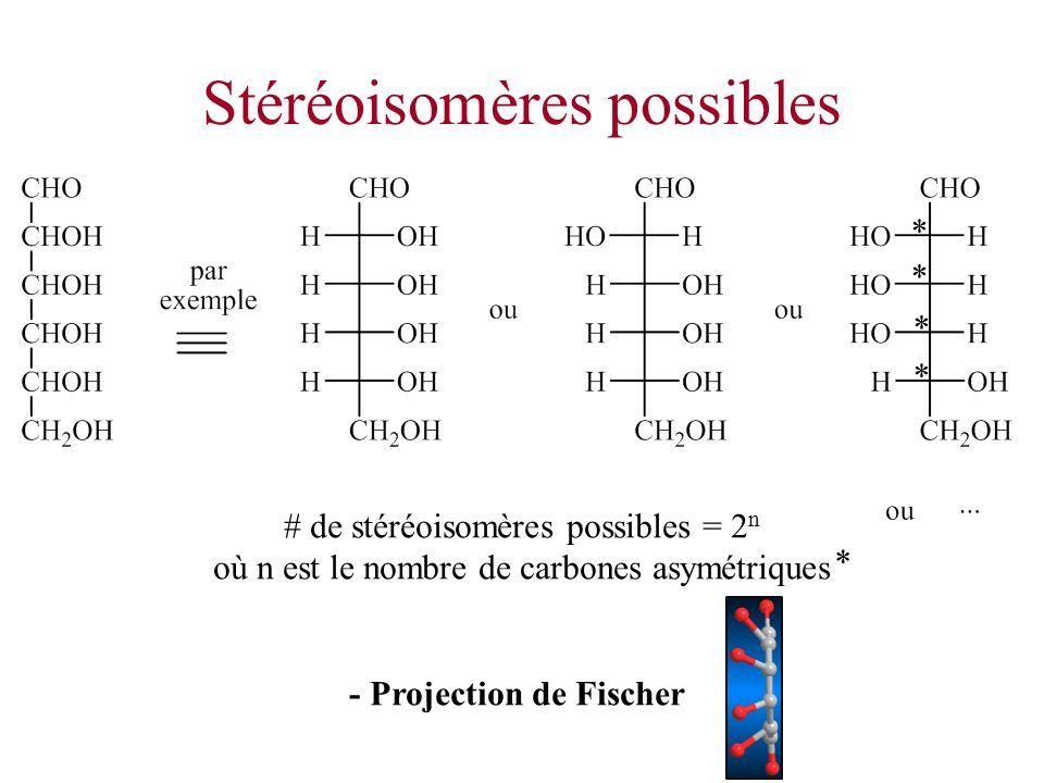 Stéréoisomères possibles # de stéréoisomères possibles = 2 n où n est le nombre de carbones asymétriques - Projection de Fischer * * * * *
