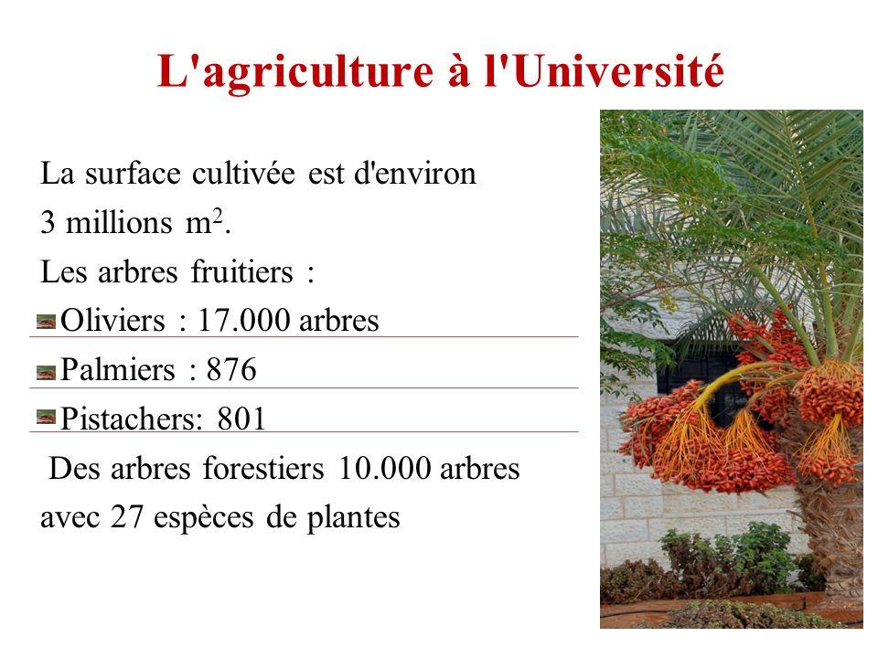 L'agriculture à l'Université La surface cultivée est d'environ 3 millions m 2. Les arbres fruitiers : - Oliviers : 17.000 arbres - Palmiers : 876 - Pi