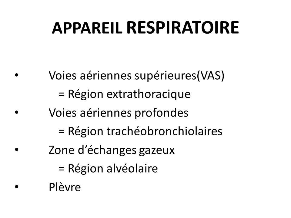 APPAREIL RESPIRATOIRE Voies aériennes supérieures(VAS) = Région extrathoracique Voies aériennes profondes = Région trachéobronchiolaires Zone déchange