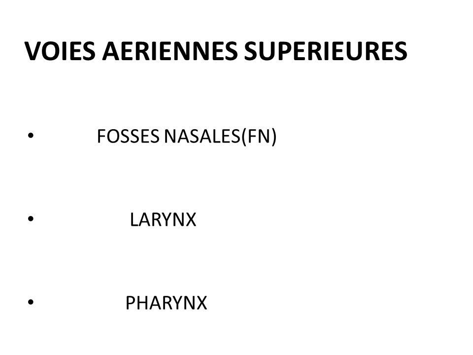 VOIES AERIENNES SUPERIEURES FOSSES NASALES(FN) LARYNX PHARYNX