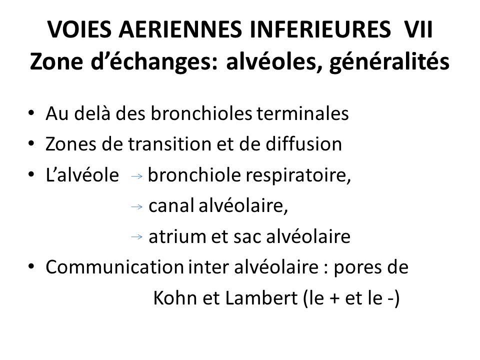 VOIES AERIENNES INFERIEURES VII Zone déchanges: alvéoles, généralités Au delà des bronchioles terminales Zones de transition et de diffusion Lalvéole