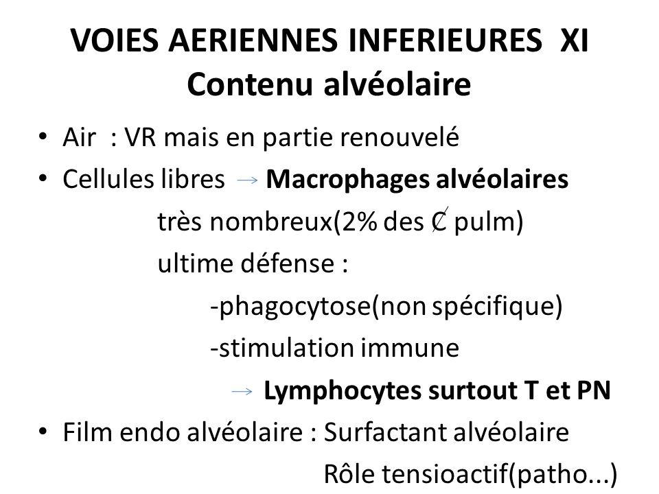 VOIES AERIENNES INFERIEURES XI Contenu alvéolaire Air : VR mais en partie renouvelé Cellules libres Macrophages alvéolaires très nombreux(2% des C pul