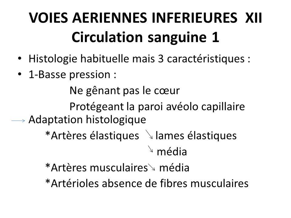 VOIES AERIENNES INFERIEURES XII Circulation sanguine 1 Histologie habituelle mais 3 caractéristiques : 1-Basse pression : Ne gênant pas le cœur Protég