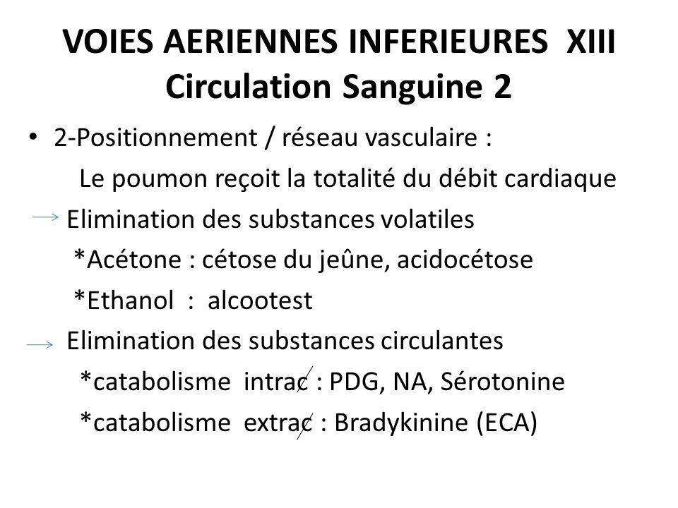 VOIES AERIENNES INFERIEURES XIII Circulation Sanguine 2 2-Positionnement / réseau vasculaire : Le poumon reçoit la totalité du débit cardiaque Elimina